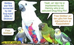 KKPS NIP SKANDAL NEWS - In another unexpected event, KKPS Skolars protest teh treatment ob dat birdie Skittles. Demands ar made to free Skittles from hiz imprisonments! Nationwide hashtag campaign iz launched: #FREESKITTLES