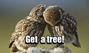 Get a tree!
