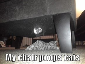My chair poops cats