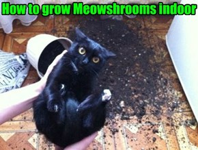 Keep Your Basement Cat Shrooms Out of Direct Sunlight