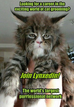 Ohai! I'z Floof, teh Lynxedin spokescat!!