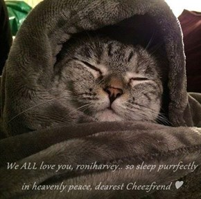 We ALL love you, roniharvey.. so sleep purrfectly in heavenly peace, dearest Cheezfrend ♥