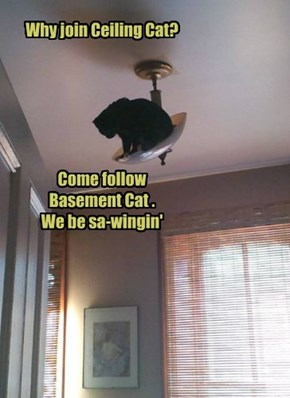 Why join Ceiling Cat?        Come follow Basement Cat .   We be sa-wingin'