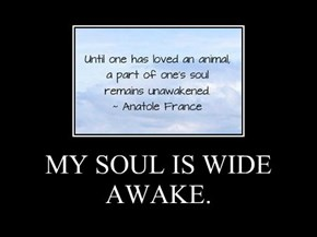 MY SOUL IS WIDE AWAKE.