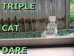 TRIPLE CAT DARE