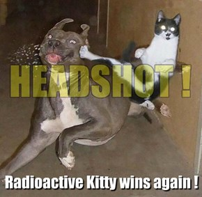 Kitty Levels Up!