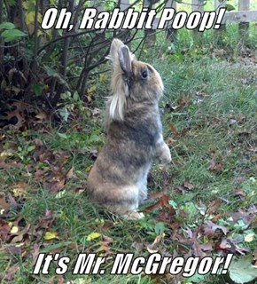 Oh, Rabbit Poop!  It's Mr. McGregor!