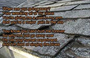 """Goodbye S****y Shingles"" TTO ""Goodbye Yellow Brick Road"" by Sir Elton John"