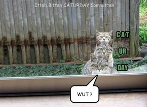 Itteh Bitteh CATURDAY Committeh duzzent kno wut yoo ar staring at, LoL