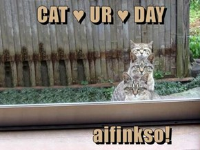CAT ♥ UR ♥ DAY                   aifinkso!