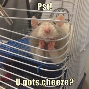 Pst!   U gots cheeze?