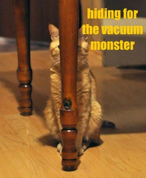 hiding for the vacuum monster