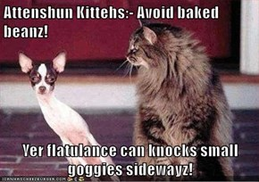 Attenshun Kittehs:- Avoid baked beanz!  Yer flatulance can knocks small goggies sidewayz!