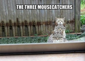 THE THREE MOUSECATCHERS