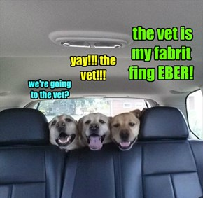 we're going to the vet?