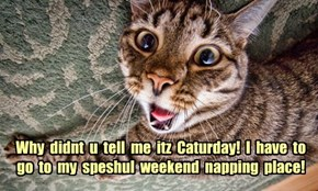 Why  didnt  u  tell  me  itz  Caturday!  I  have  to  go  to  my  speshul  weekend  napping  place!