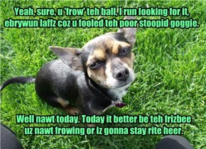Yeah, sure, u 'frow' teh ball, I run looking for it, ebrywun laffz coz u fooled teh poor stoopid goggie.