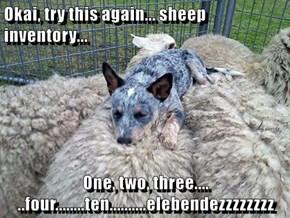Shepherd Problems