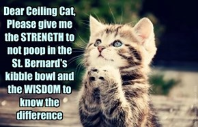 Dear Ceiling Cat, Please give me the STRENGTH to not poop in the St. Bernard's kibble bowl and the WISDOM to know the difference
