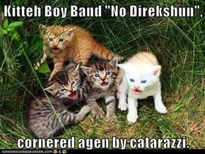 "Kitteh Boy Band ""No Direkshun"",  cornered agen by catarazzi."