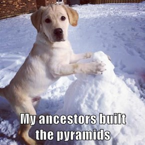 My ancestors built                             the pyramids