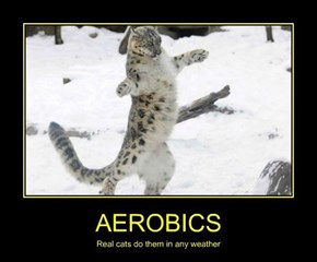 Cats Are Really Into Cardio