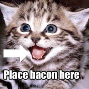 No one can resist the bacon
