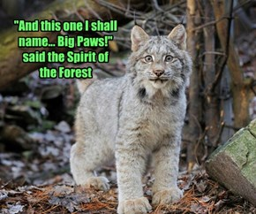 """And this one I shall name... Big Paws!"" said the Spirit of the Forest"
