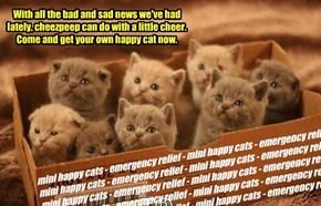 mini happy cats - emergency relief - mini happy cats - emergency relief - mini happy cats - emergency relief - mini happy cats - emergency relief - mini happy cats - emergency relief - mini happy cats - emergency relief - mini happy cats - emergency relie