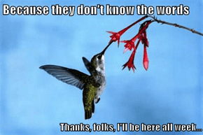 Why do hummingbirds hum ?