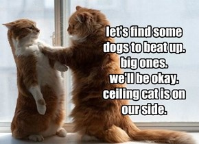 let's find some dogs to beat up. big ones. we'll be okay. ceiling cat is on our side.