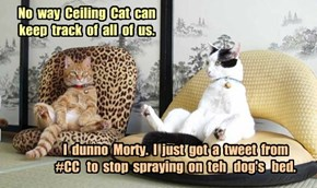 No  way  Ceiling  Cat  can  keep  track  of  all  of  us.