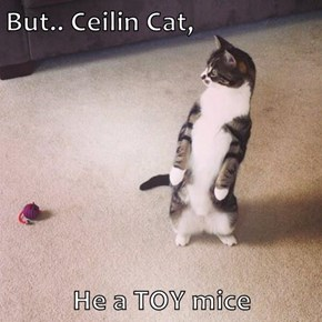 But.. Ceilin Cat,   He a TOY mice