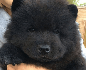 Join the Internet as it Tries to Figure Out What Even is This Floof?