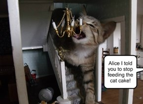 Alice I told you to stop feeding the cat cake!