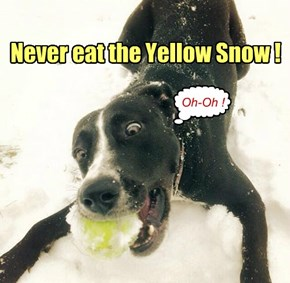 Never eat the Yellow Snow!