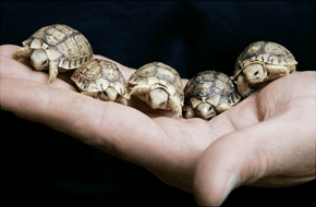 It's Tiny Tortoise Time!