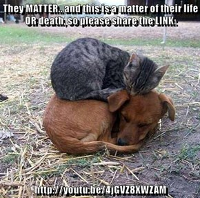 They MATTER.. and this is a matter of their life OR death, so please share the LINK:  http://youtu.be/4jGVZ8XWZAM