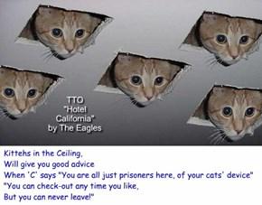 """Hotel CATifornia"" (TTO ""Hotel California"" by The Eagles)"