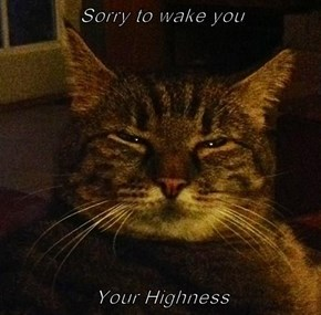 Sorry to wake you  Your Highness