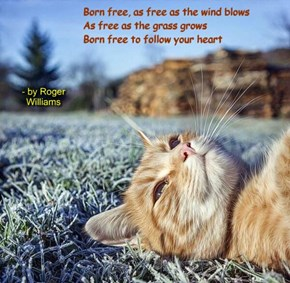 """Born Free"" by Roger Williams"