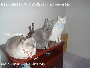 Itteh Bitteh Tax Collector Committeh   Yes, ma'am.. we charge indignity tax