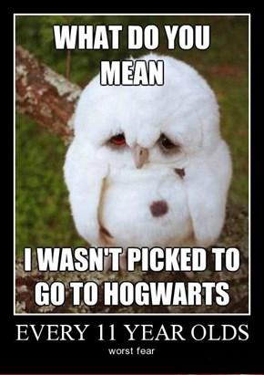 Owls Can Look So Sad