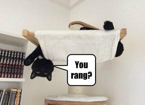 Yes, I am catting properly!