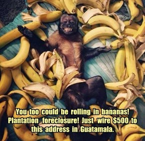 You  too  could  be  rolling  in  bananas!   Plantation   foreclosure!  Just   wire  $500  to  this  address  in  Guatamala.