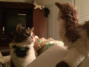 Lily's Not Quite Sure What to Make of Her New Friend