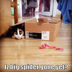 Iz big spider gone yet?