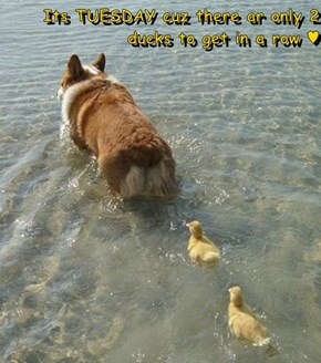 Its TUESDAY cuz there ar only 2 ducks to get in a row ♥