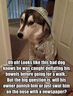 Uh oh! Looks like this bad dog knows he was caught deflating his bowels before going for a walk... But the big question is, will his owner punish him or just swat him on the nose with a newspaper?