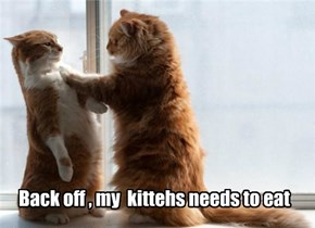 Greek Kitteh stands up to the Austerity Cat